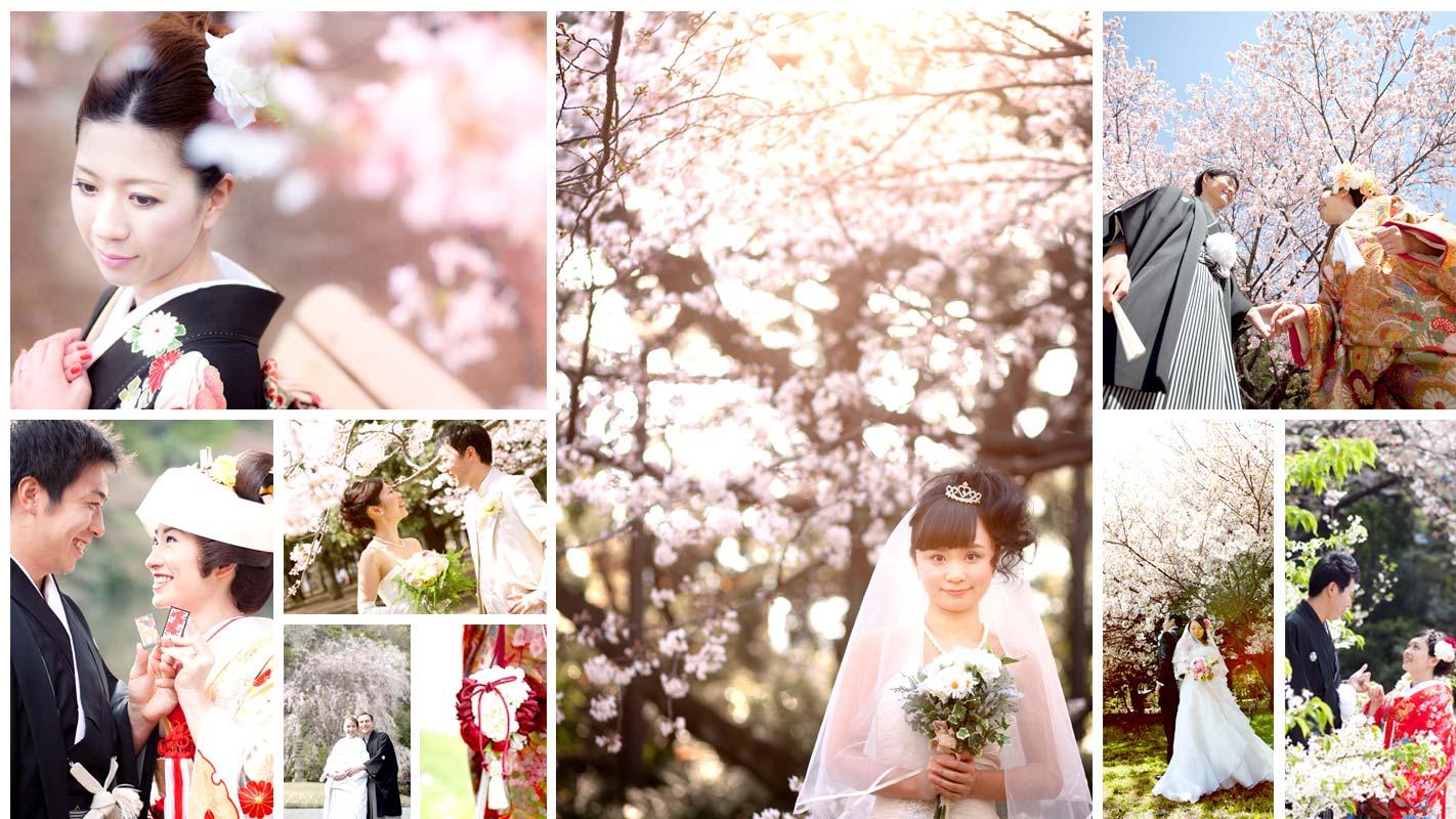 bg_gallery_sakura1000