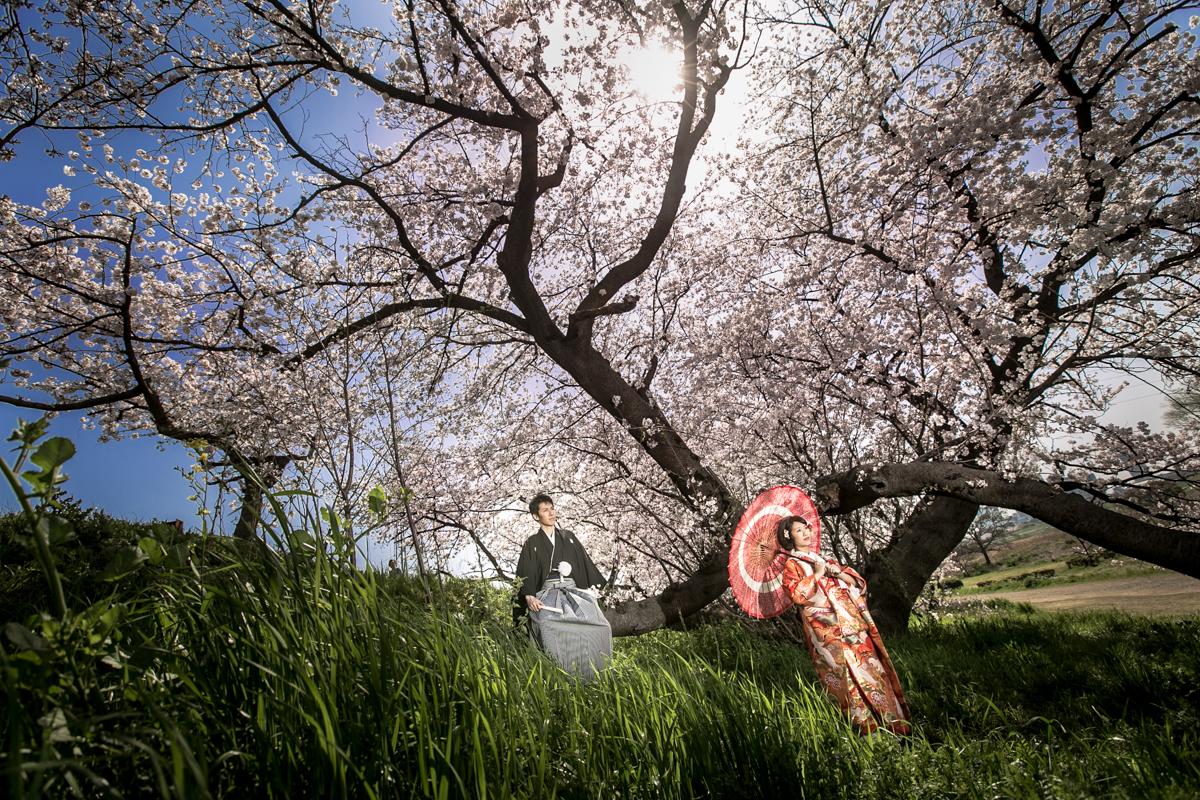 桜 フォトウェディング