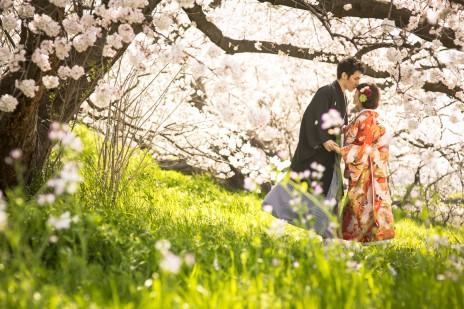 桜のフォトウェディング