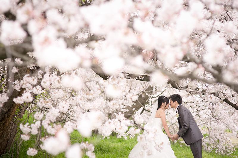 4.桜を背景におでこや鼻をコツンと当てるポーズ