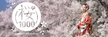 桜サウザン / 桜(さくら)のロケーションフォト